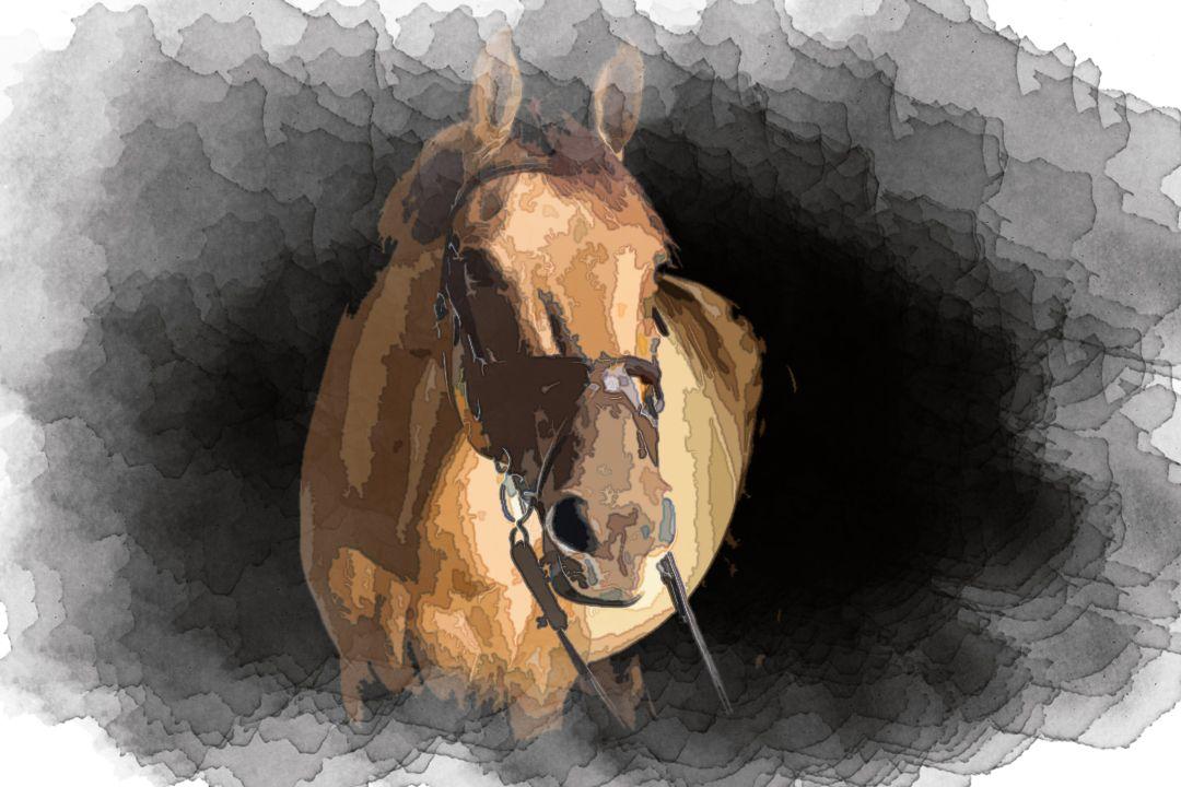 brown horse in dark room