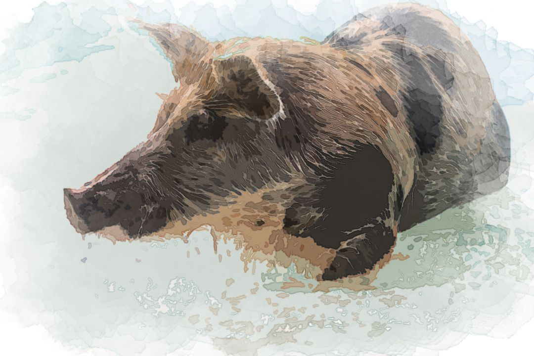 brown and black pig in body of water