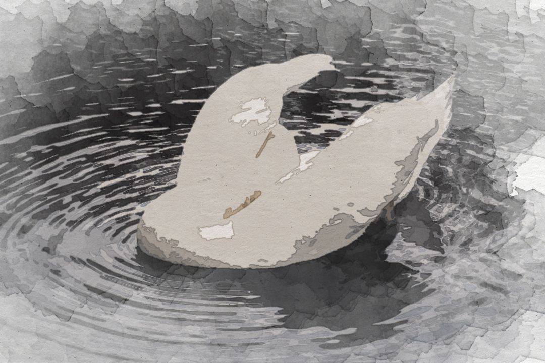 selective focus photography of white swan on body of water