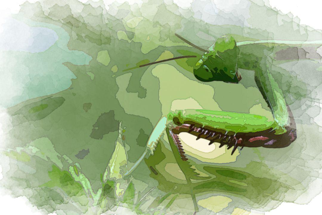 green mantis near green plant