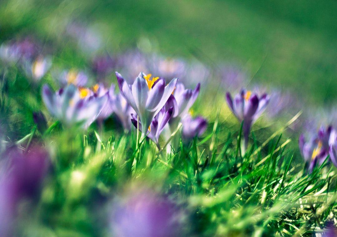 purple flower in bloom during daytime