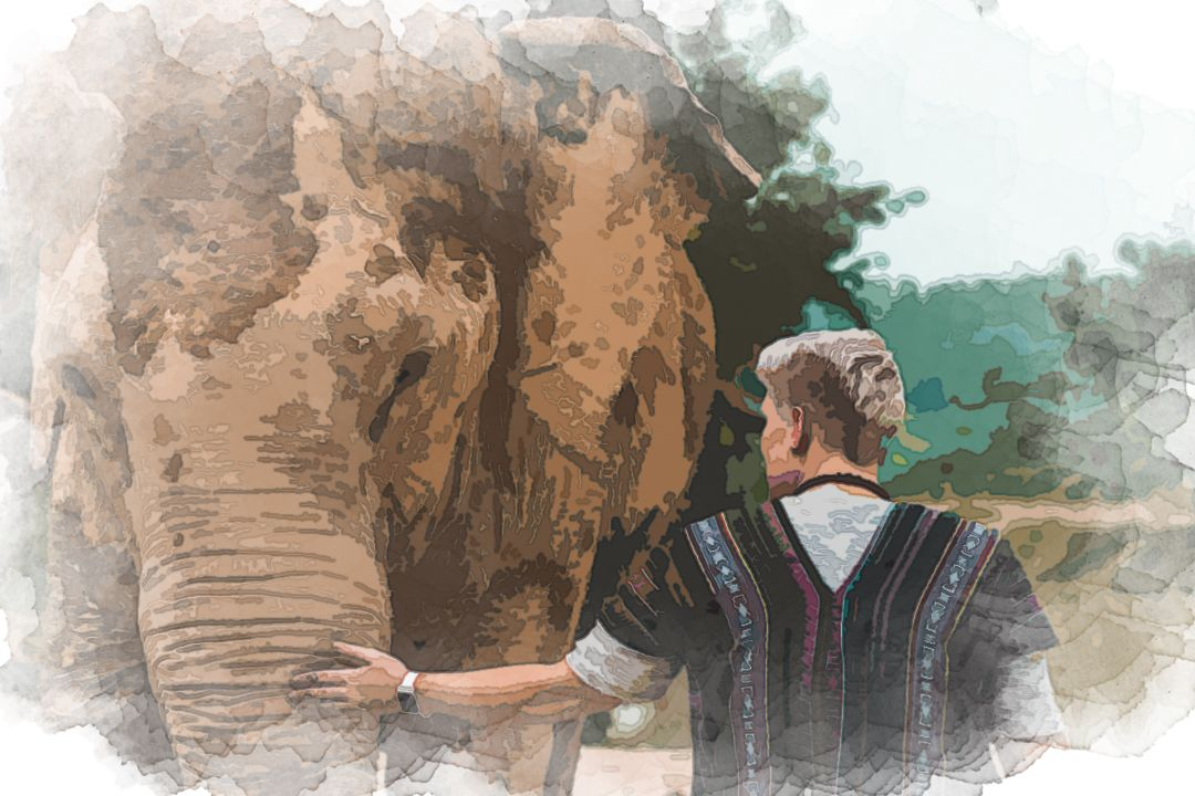 A capture from my amazing day spent at the Elephant Jungle Sanctuary Pattaya Thailand. We fed them, gave them mud baths, and played with these amazing creatures all while maintaining their utmost health and safety.